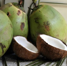 Fresh young and mature coconuts
