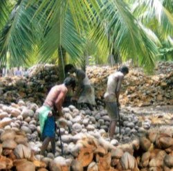 Coconut oil wholesale from small local farmers can help change lives.